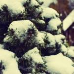 Prvý sneh
